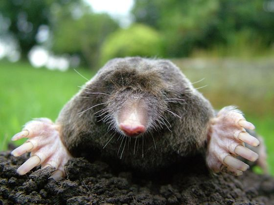 Close-up of mole