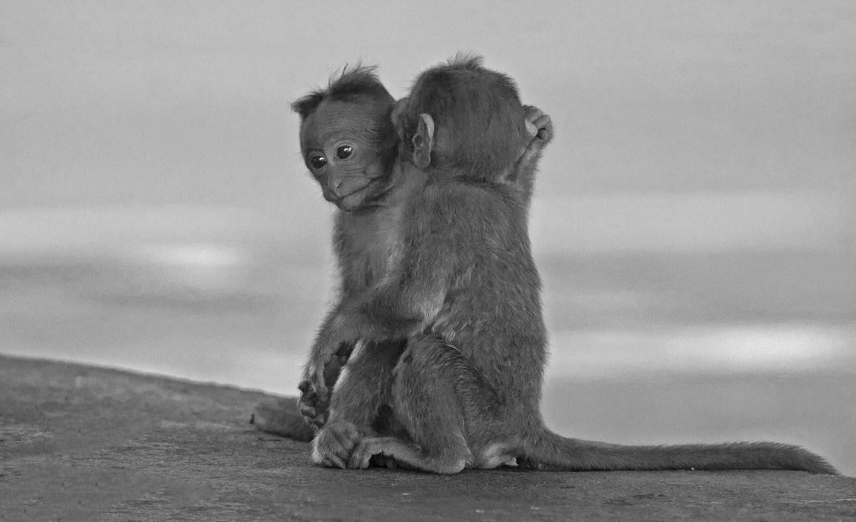 Monkey_Whisper