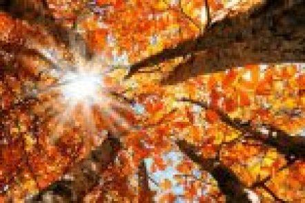 stagione autunno