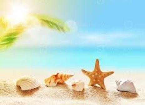 matrimoinio-matrimonio in spiaggia conchiglie-spiaggia-cpnchiglie