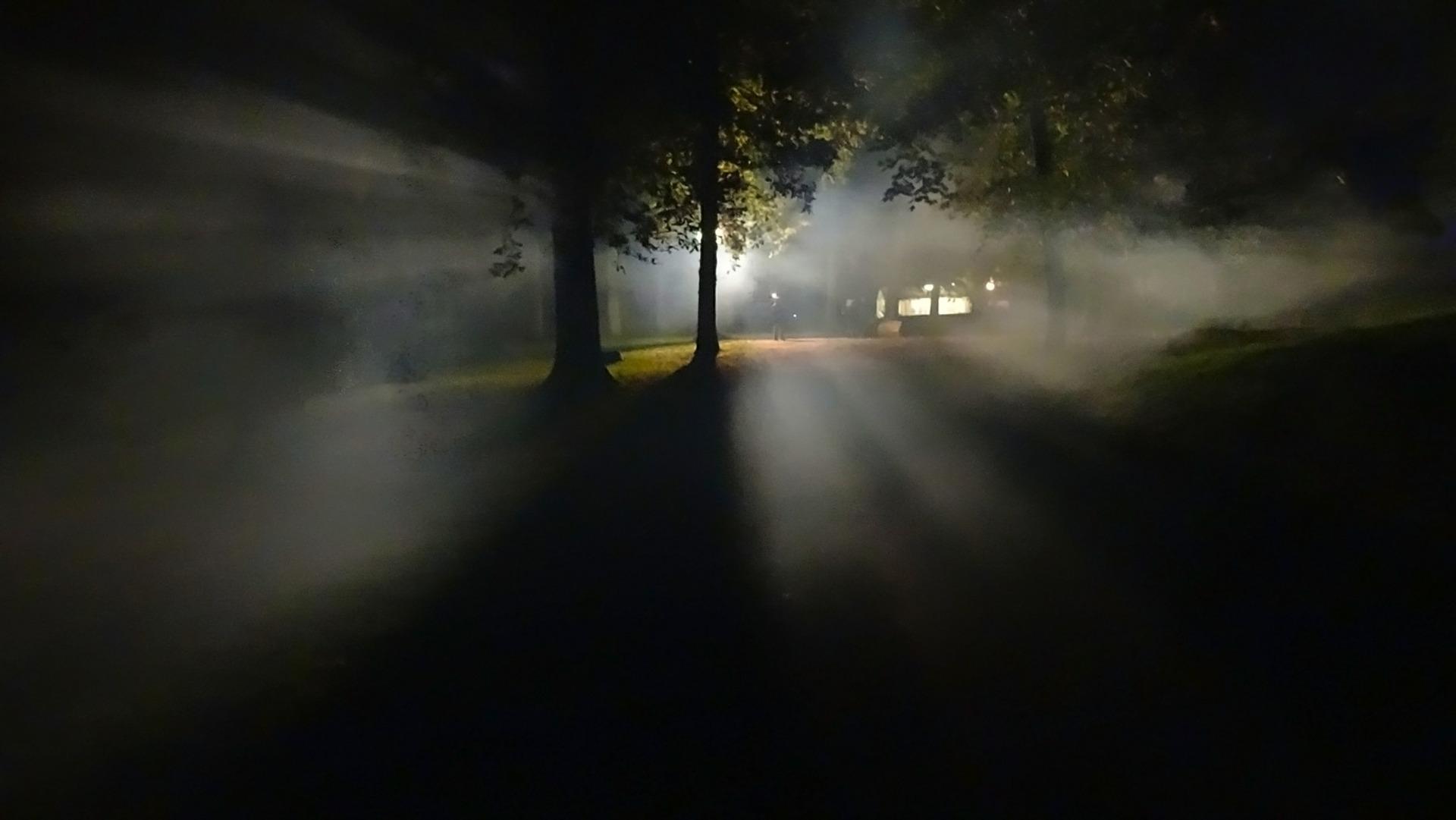 Niebla en la noche de un frondoso bosque