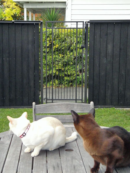 Happy cats in a yard equipped with the Oscillot cat fence system