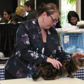 All Breeds Cat Show in Hamilton, New Zealand, 3 July 2016