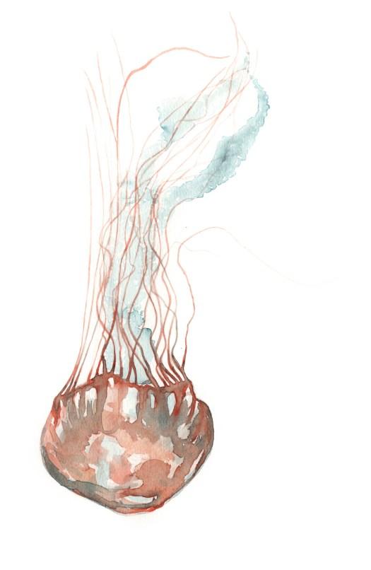 JellyFish_72
