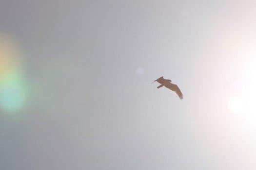 IMG_8174_osprey