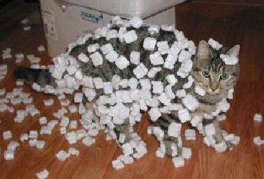 Static Kitties 7 Ways to Control Winter Cat Static