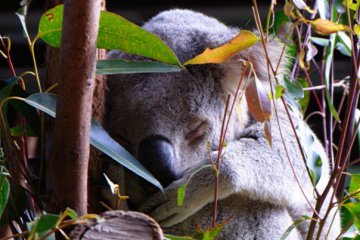 35210_1475156472481_7702331_n australia zoo is the best Australia Zoo is the Best 35210 1475156472481 7702331 n