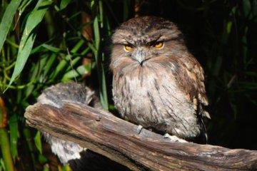 38880_1475153032395_997491_n australia zoo is the best Australia Zoo is the Best 38880 1475153032395 997491 n