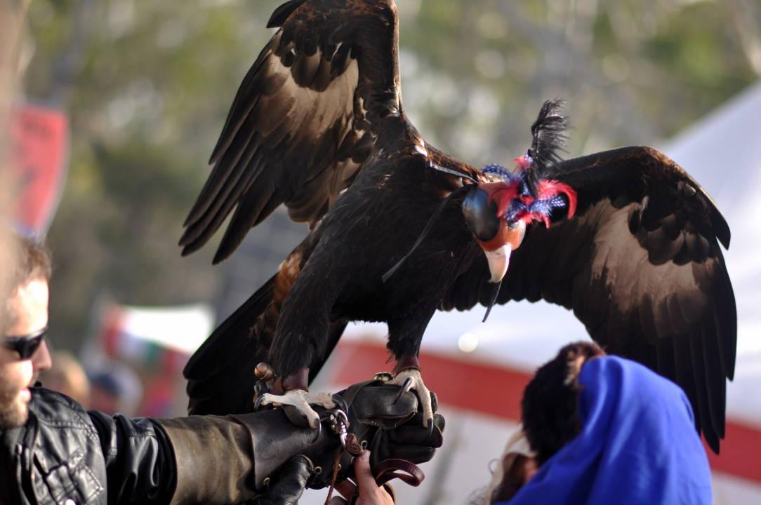 abbey medieval festival Abbey Medieval Festival 2012 2012 07 08T133222 v1