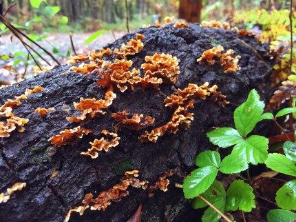 Tree mushrooms.