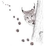 Lynx Dessin