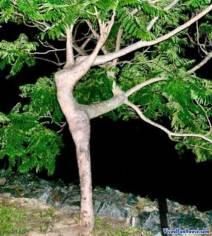 dancing-tree-optical-illusion