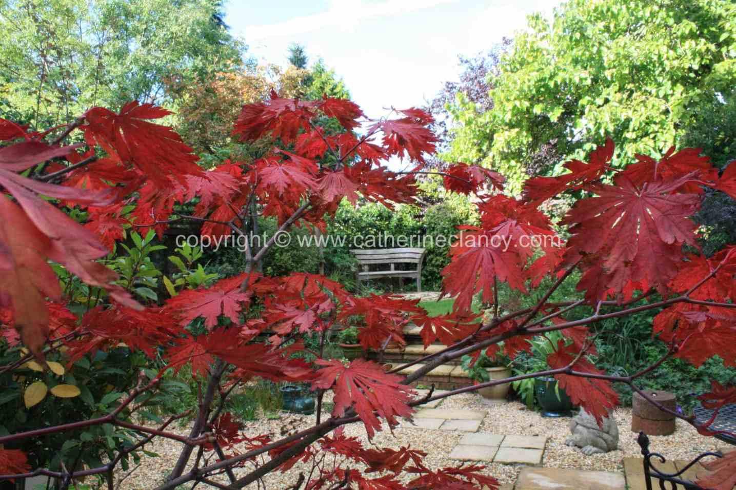 blackheath-walled-garden-3