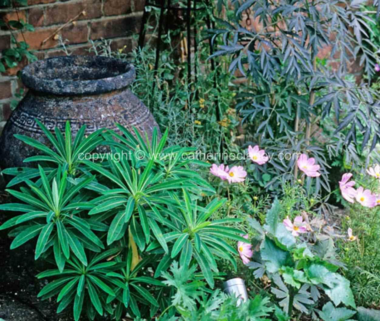 blackheath-walled-garden-planting