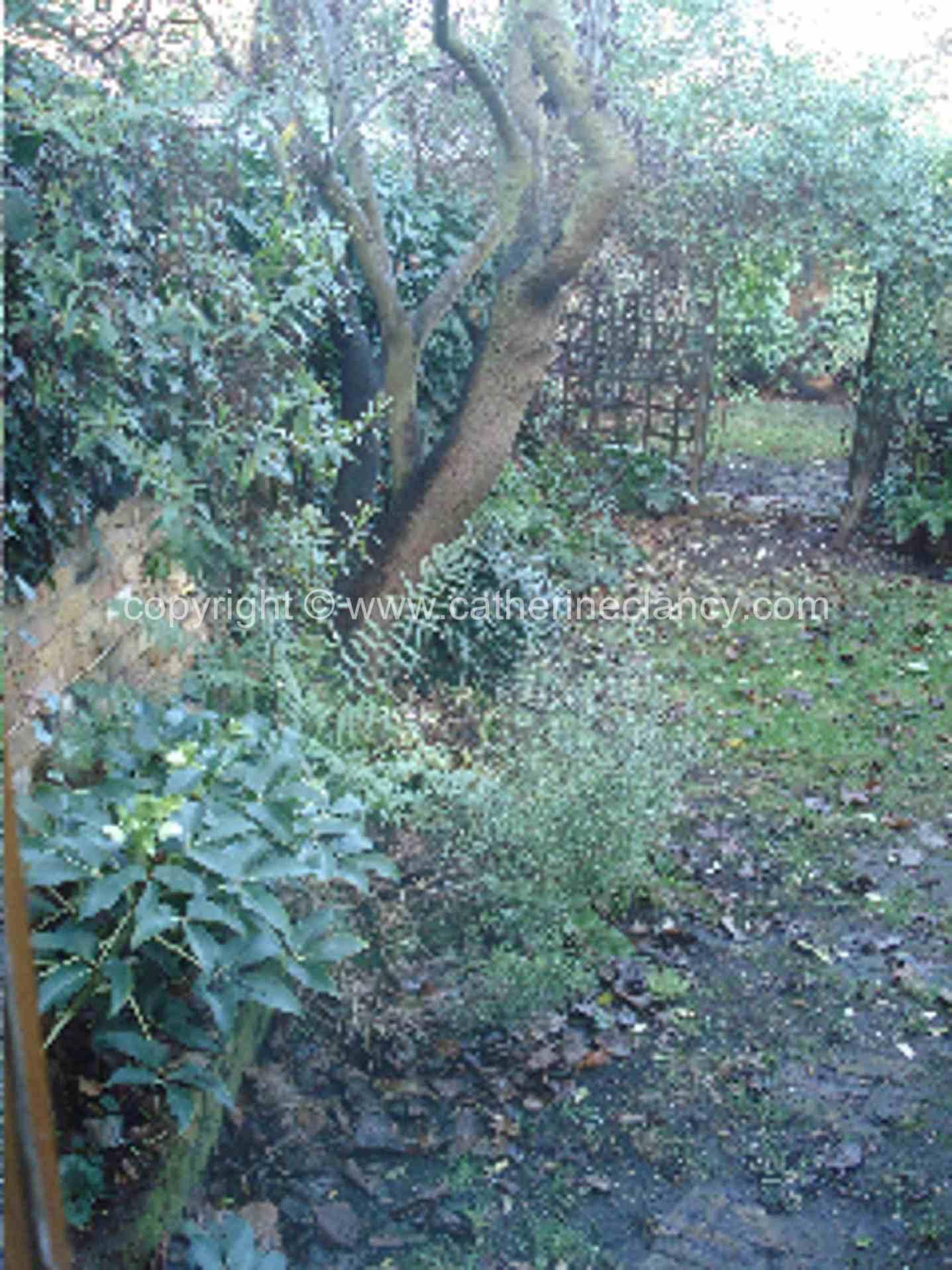 chiswick-secret-garden-5