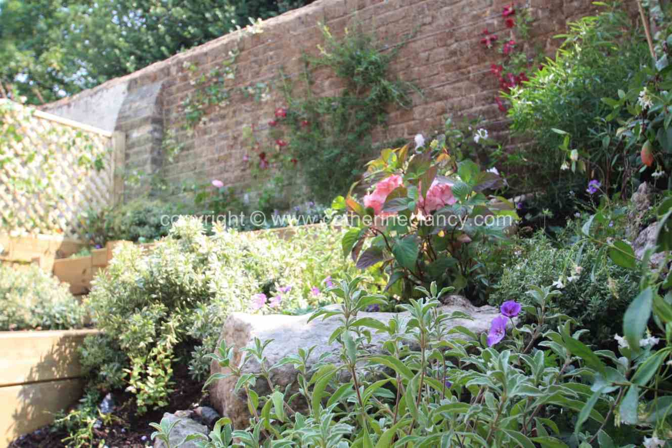 greenwich-terraced-garden-12