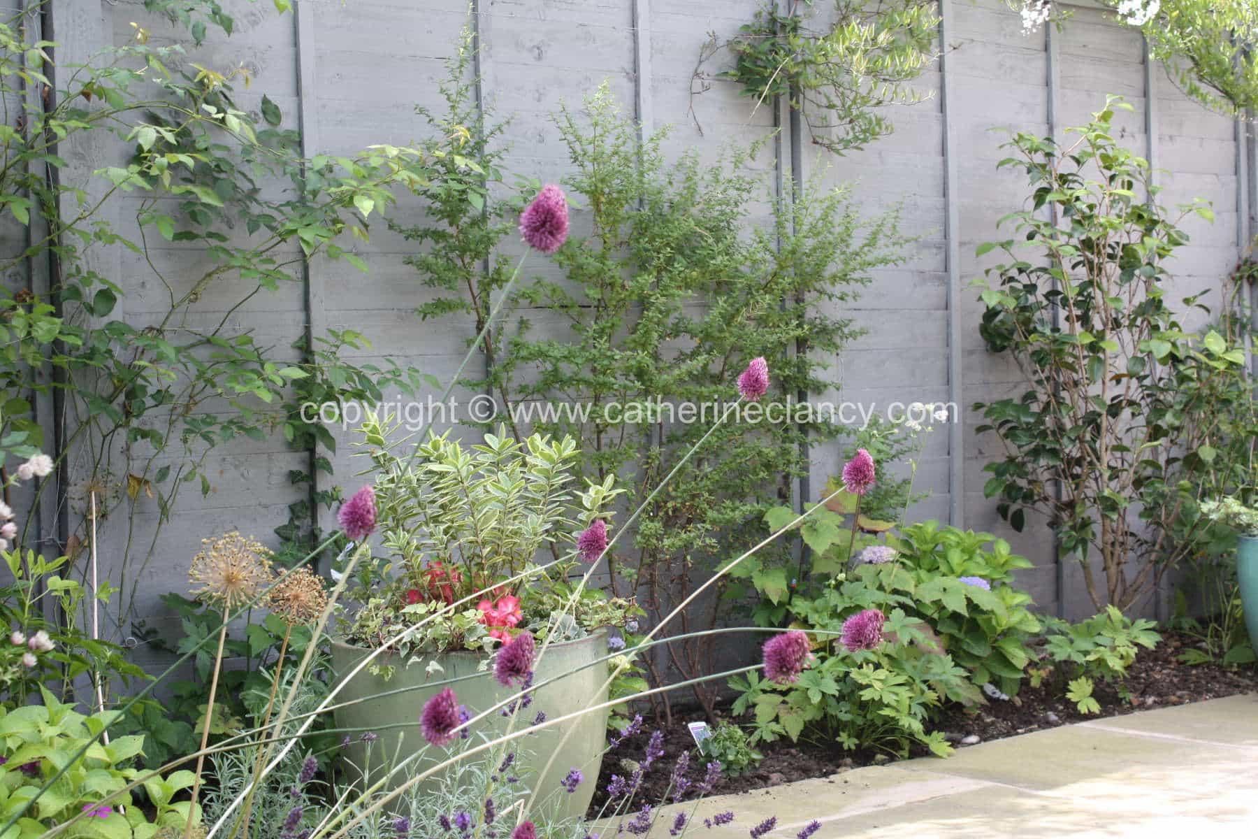 peckham-blue-garden-1