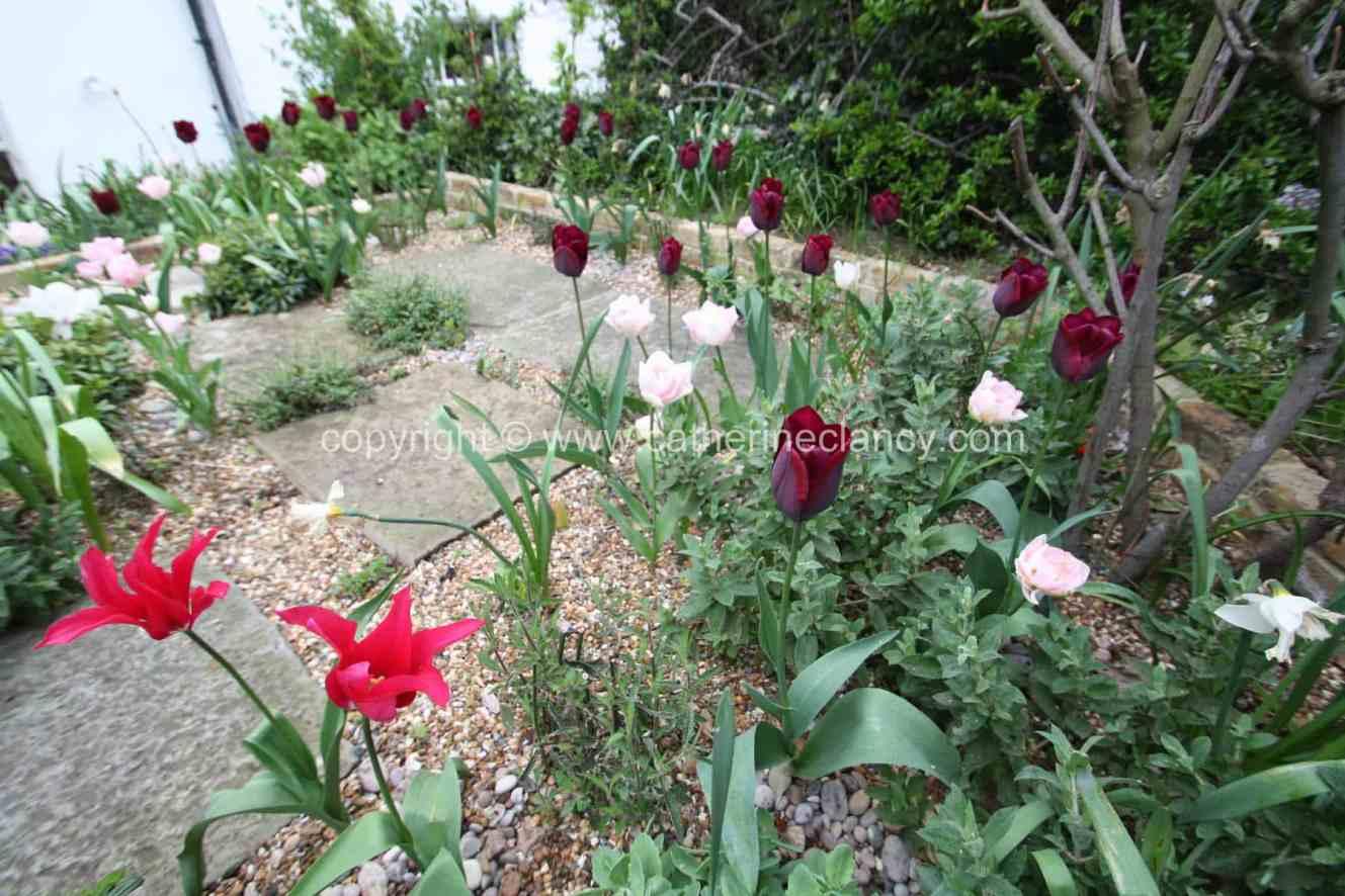 west-greenwich-gravel-garden-13