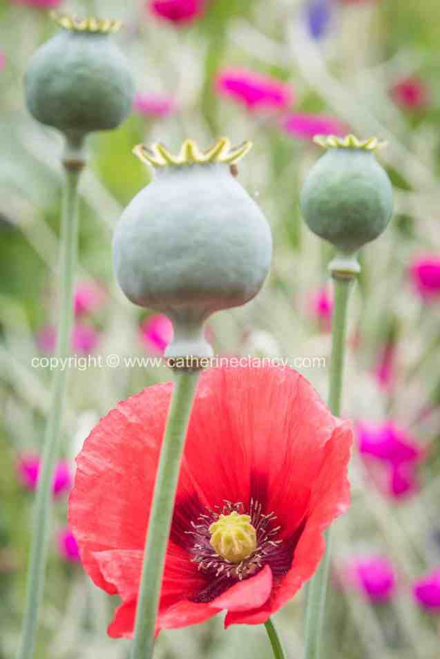 blackheath natural flower garden (31)