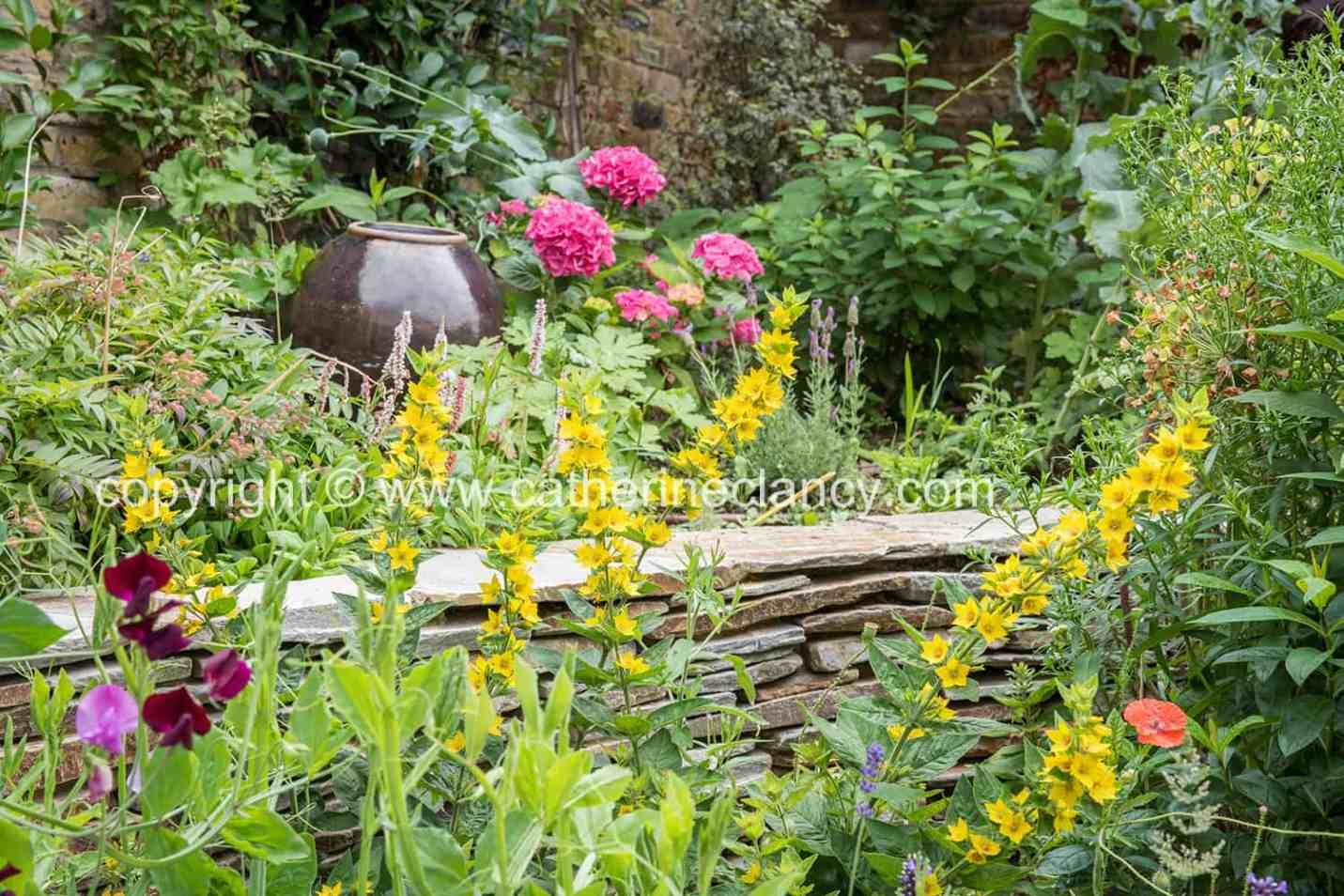 blackheath natural flower garden (39)