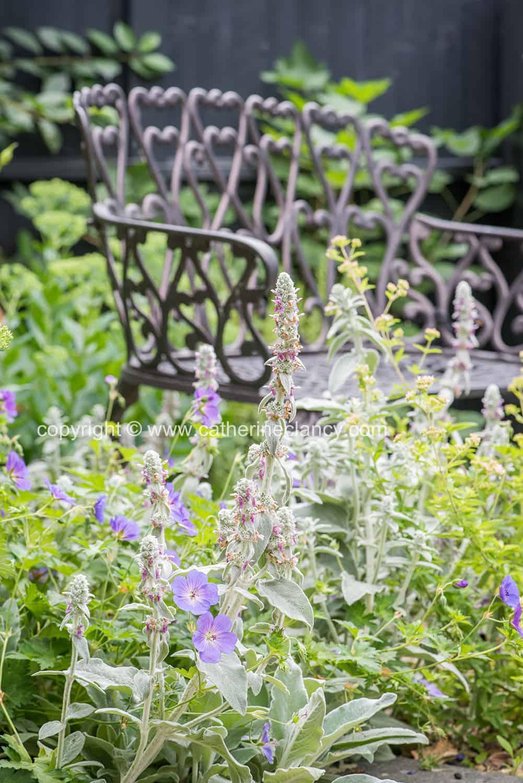 contemporary blackheath front garden 6