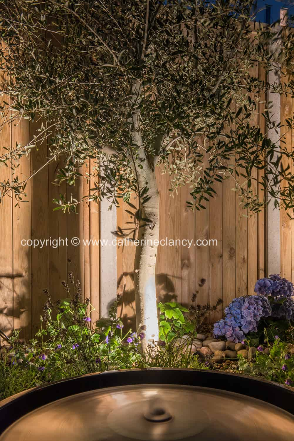 uplighting an olive tree