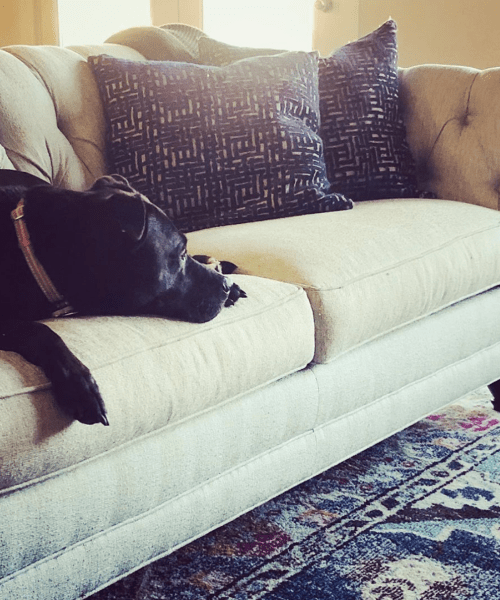 Catherine French Design - My dog on the Couch