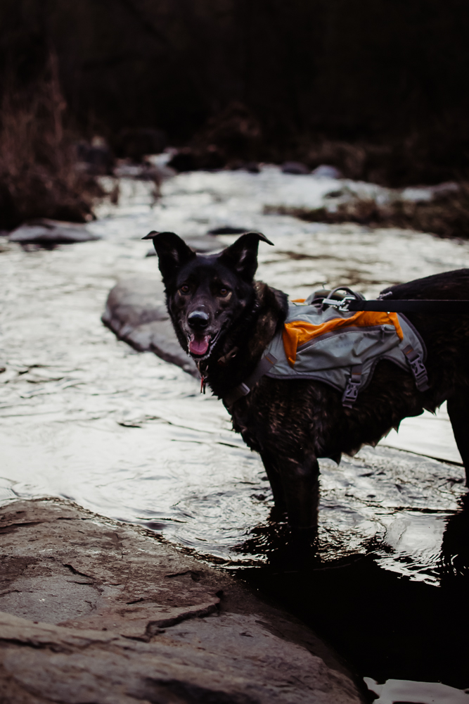 wet dog in river hiking mission trails san diego {virginia beach lifestyle newborn child couples family engagement photographer}