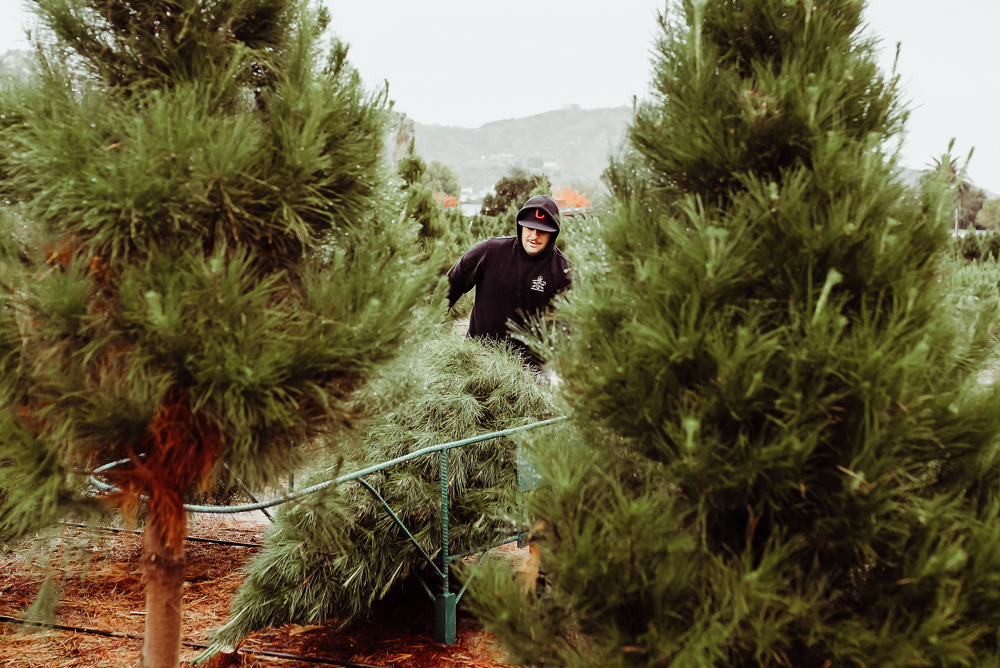 family cutting down christmas tree santee san diego california maternity session {virginia beach chesapeake lifestyle child couples family military homecoming photographer holistic healer transformational mentor}