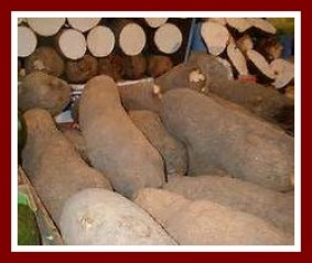 Yams like those for the new yam festival
