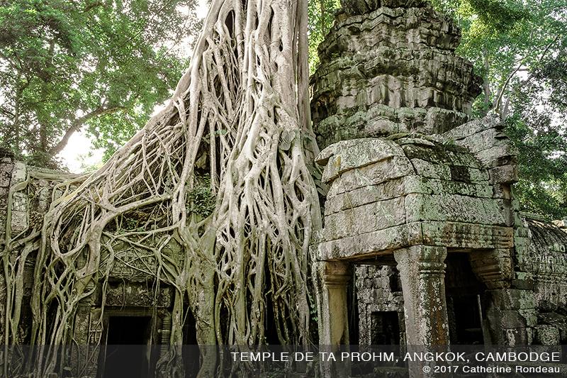 ancien temple de pierre envahi par la jungle et des racines géantes d'un arbre