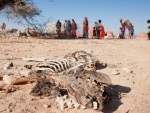 Six million in Somalia starving to death