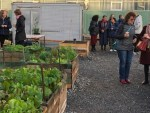 Soup Kitchen vegetable garden opened in downtown Wellington