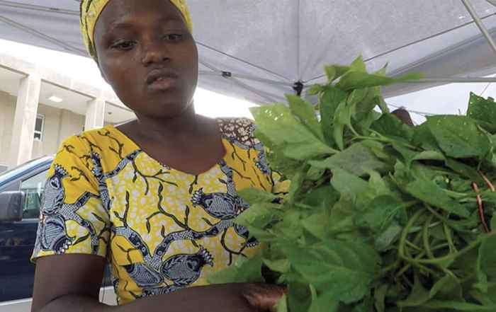 Refugee farmer in traditional clothing holding lettuce
