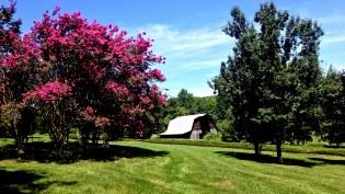 Barn in August