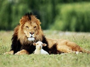 lion-and-lamb2