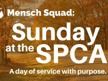 Permalink to: Sunday at the SPCA