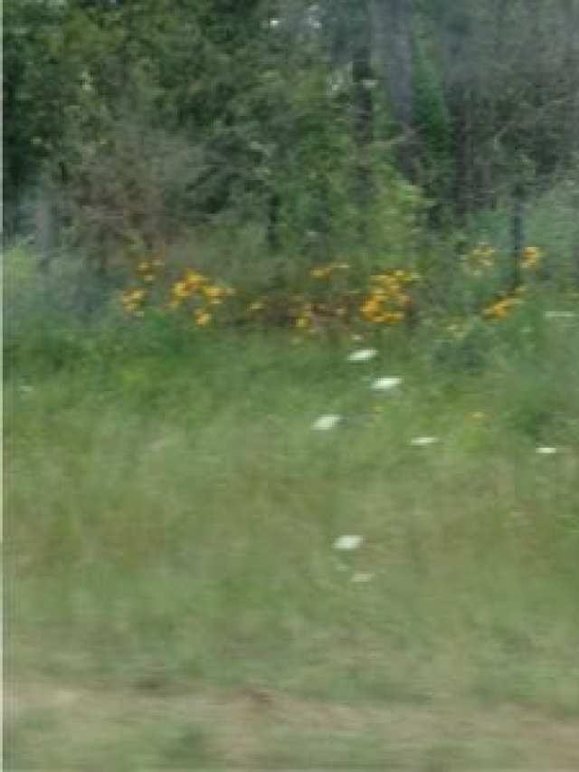 flowers on arj=kansas roadside
