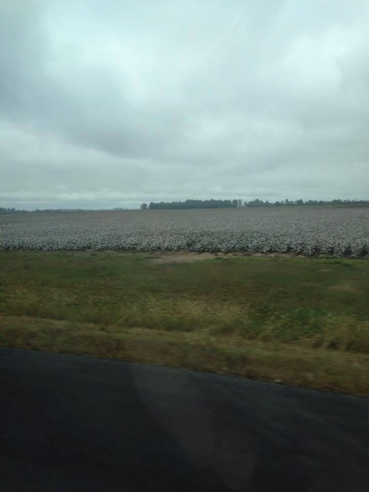 Serenity Sunday~~Cotton fields Back Home