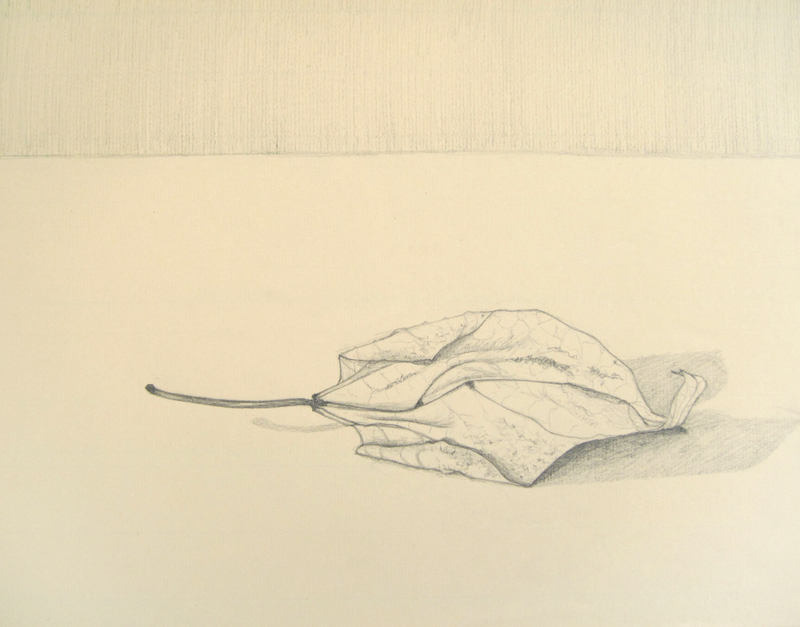 Catalpa Leaf drawing by Cathy Durso