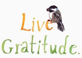 gratitude habit