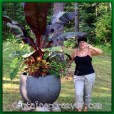 Tropical Plants like these are sold in the workshop - Want to create drama with plants - Come Join this Workshop!