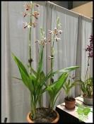 Floral Design Workshop_0019