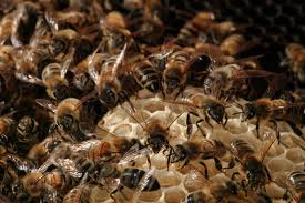 Bees in the yard? You need a Sangoma! (5/6)