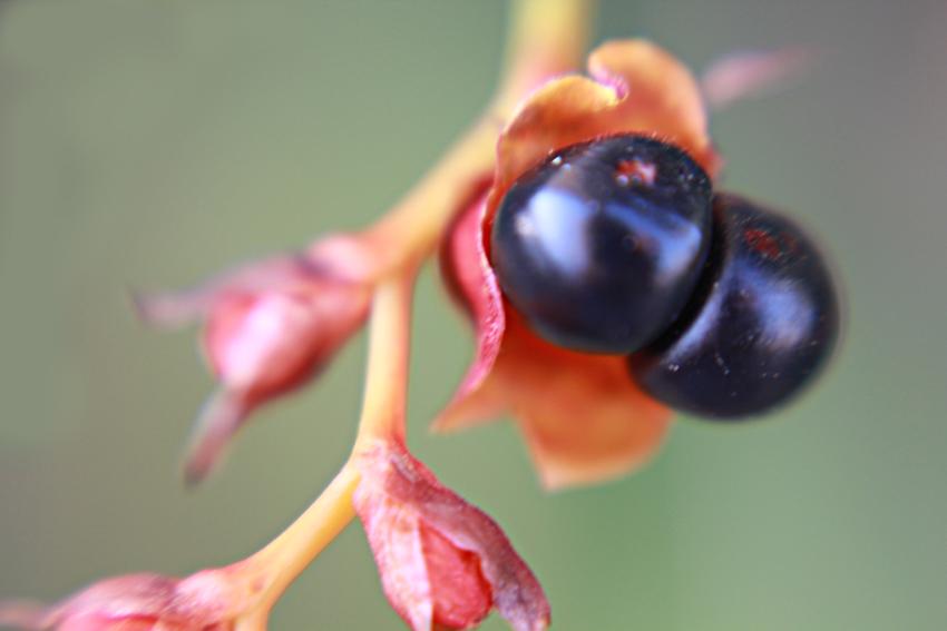 Photography: Flowers in my Garden (2/6)