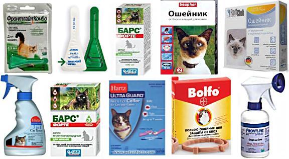 Клещевой энцефалит у кошек симптомы и лечение. Симптомы и лечение энцефалита у кошек. Кошку Тэфи укусил на даче клещ