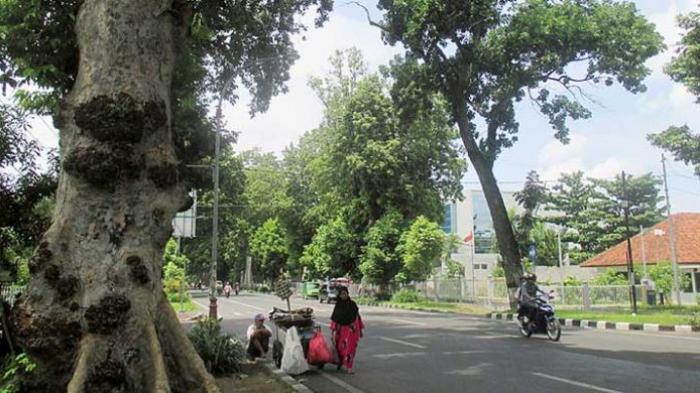 Pohon Kenari