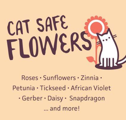 A list of cat safe plants