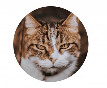 Gesichtsausdruck einer entspannten Katze