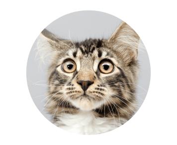 Gesichtsausdruck einer besorgten Katze
